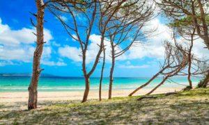 Сосновый пляж Мария-Пиа (Альгеро)