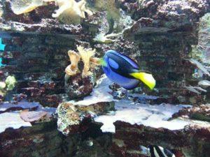 Морской аквариум (Триест)